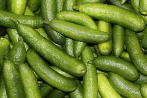 Chartreuse Finger Lime harvest2