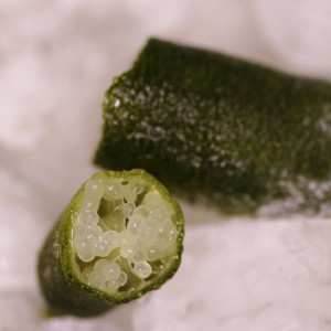 Frozen Chartreuse Finger Lime