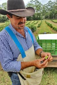 Farmer Greg with Finger Limes