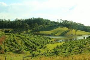 Citrus Orchard 2012
